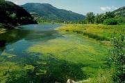lago-di-bolsena_eutrofizzazione