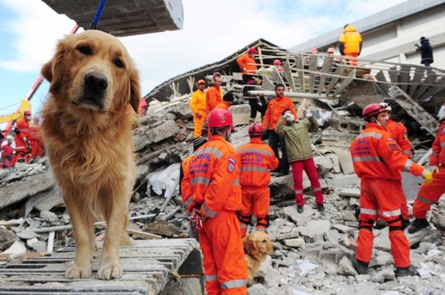 C'è un segnale nei forti terremoti che potrebbe salvare vite umane