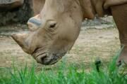 Perché negli zoo si fa ricerca solo su alcuni animali?