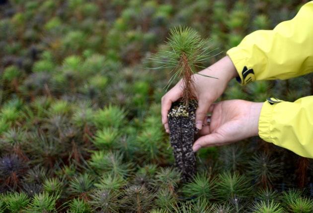 Potremmo ricoprire di alberi un'area estesa quanto gli Stati Uniti