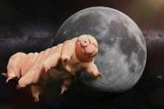 tardigradi-luna
