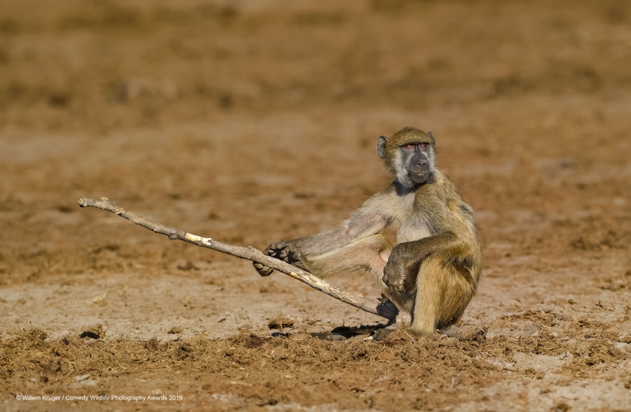 willem-kruger_baboon-fishing_00003005