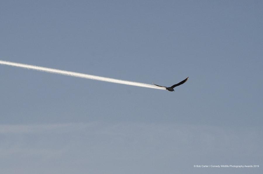 bob-carter_is-it-a-bird-is-it-a-plane_00004134