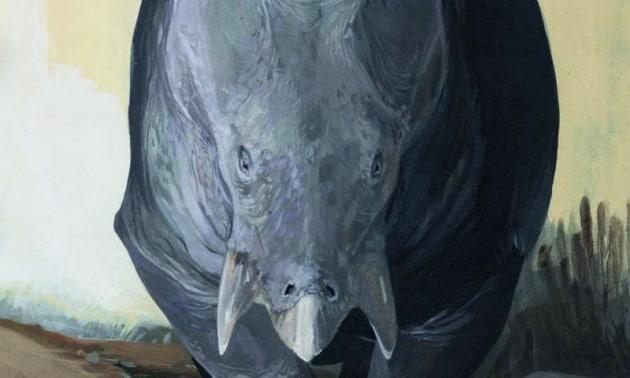 erbivoro-rhino
