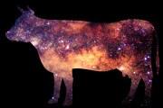 galassia-mucca