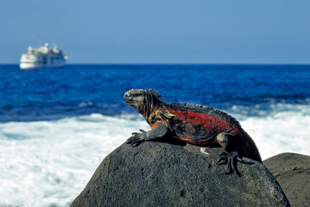 Le acque delle Galápagos sono infestate di specie aliene