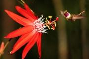 piante-vibrazioni-colibri