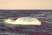 ricerche-petrolifere-in-oceano