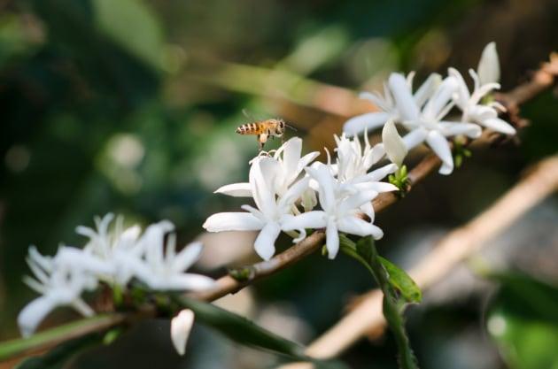 Più impollinatori, meno parassiti: così la biodiversità migliora la resa dei raccolti