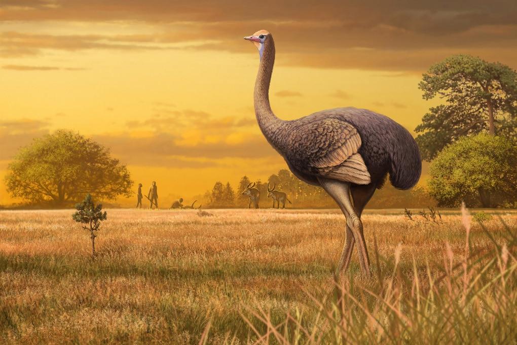 Fossili della Crimea: l'uccello gigante del Pleistocene