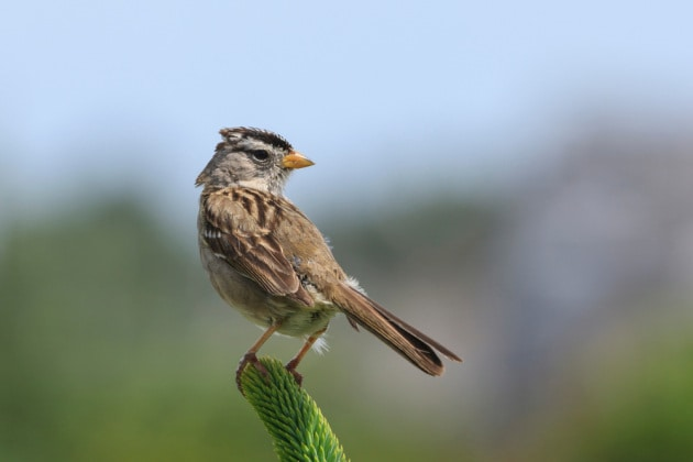 I pesticidi neonicotinoidi minacciano la sopravvivenza degli uccelli selvatici