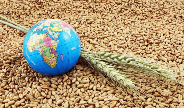 Biodiversità, allarme della FAO: le poche specie di cui ci nutriamo sono a rischio