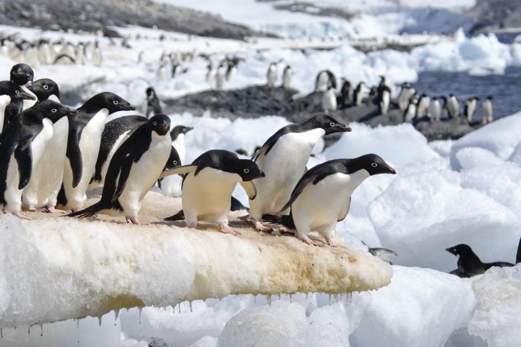 In Antartide: hotspot di biodiversità dal guano di pinguino