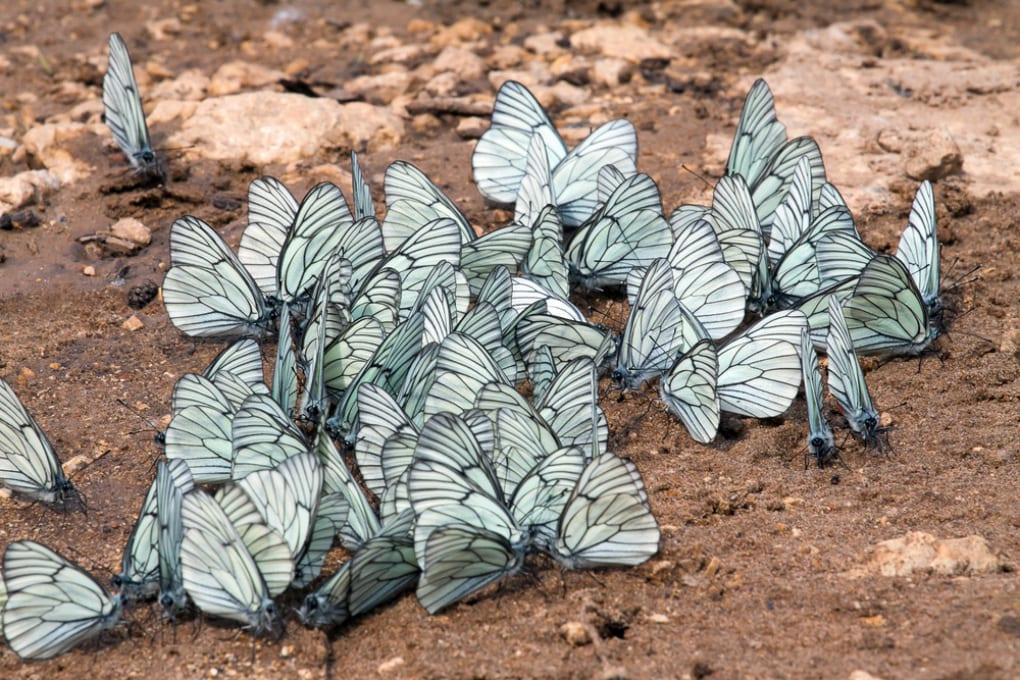 Gli insetti hanno origini molto più antiche di quanto si credesse