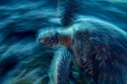 asferico-2019_sottomarina