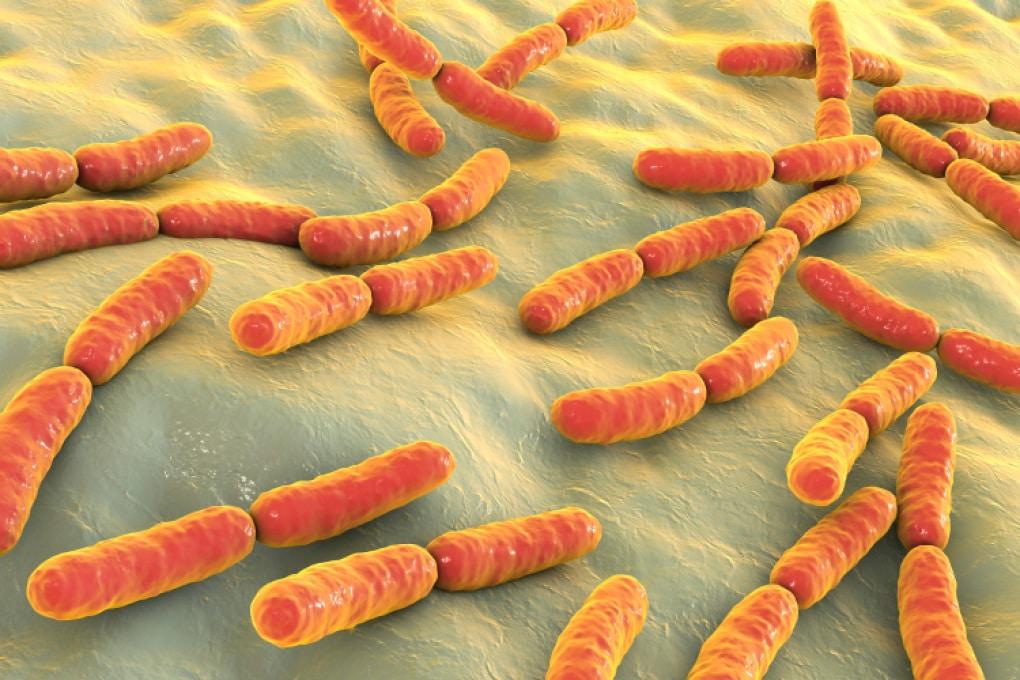Antibiotici e probiotici: un attacco combinato contro i batteri resistenti nelle ferite