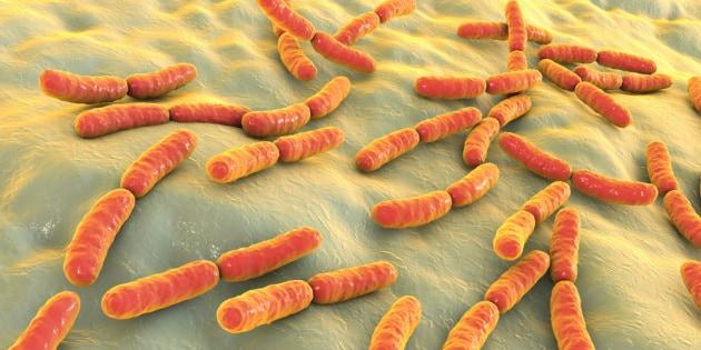 bacteria-probiotics