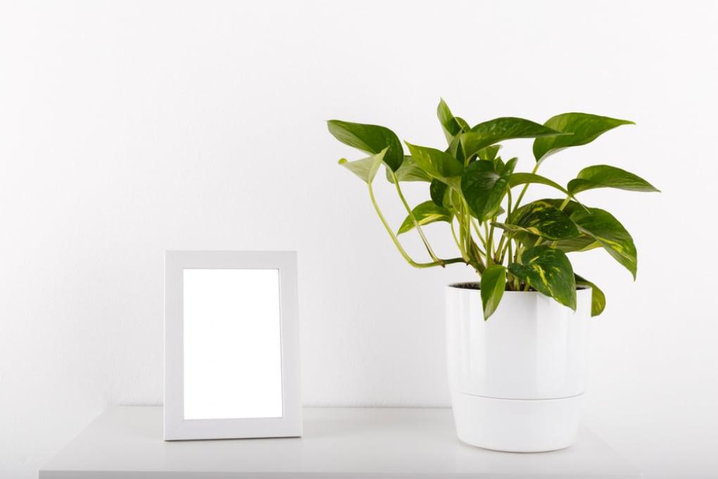 La pianta OGM che depura l'aria di casa