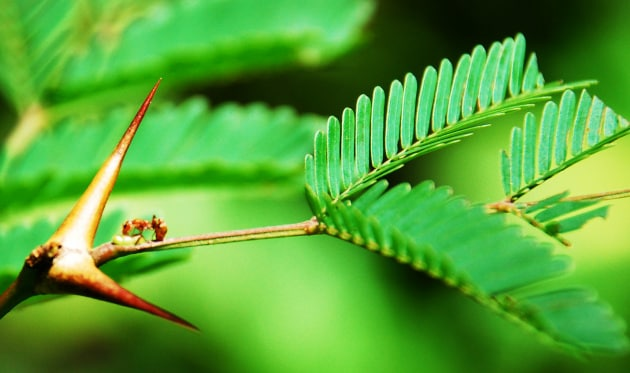 piante-spine