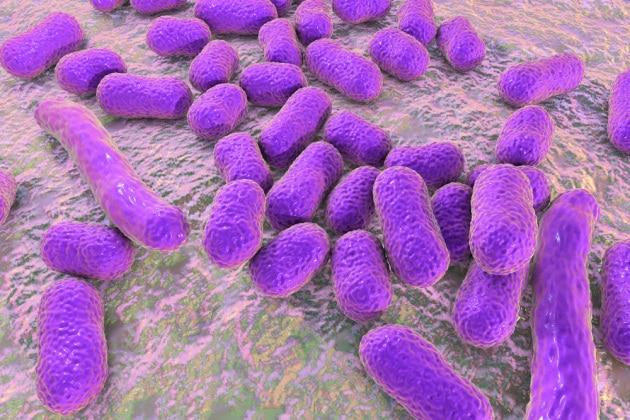 Dall'analisi delle fognature: la mappa mondiale dell'antibiotico-resistenza