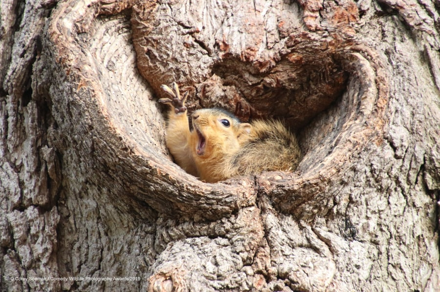 corey-seeman_who-would-like-a-peanut-squirrels-at-the-university-of-michigan_00003651
