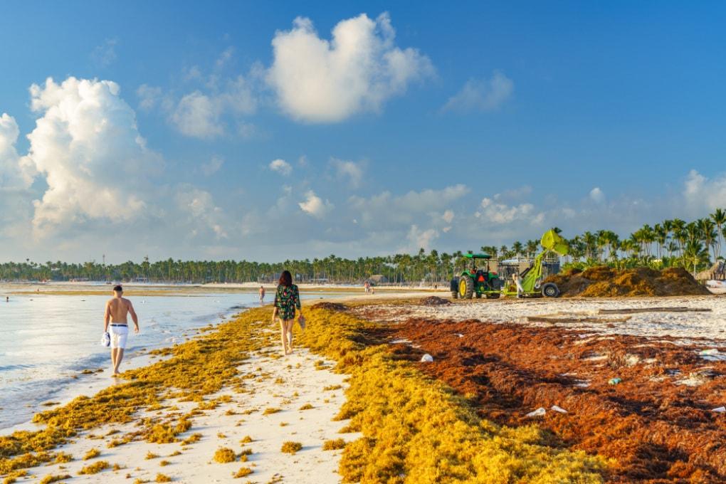 La cintura di alghe che attraversa l'Atlantico per 9000 km