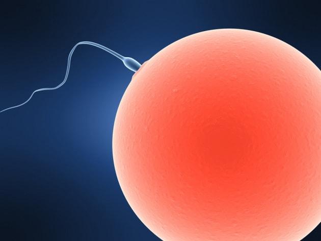 Aborti spontanei ricorrenti e spermatozoi danneggiati: c'è un legame