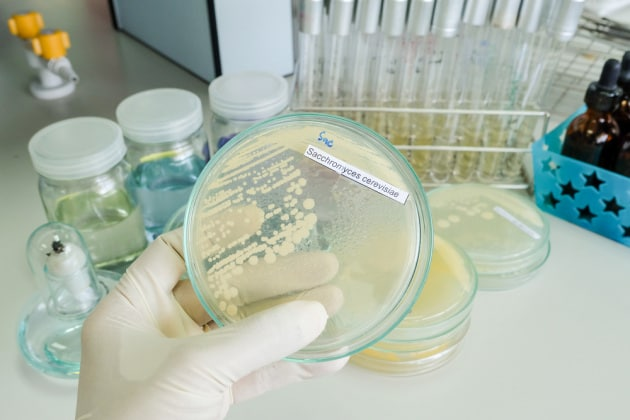 la candida è un fungo