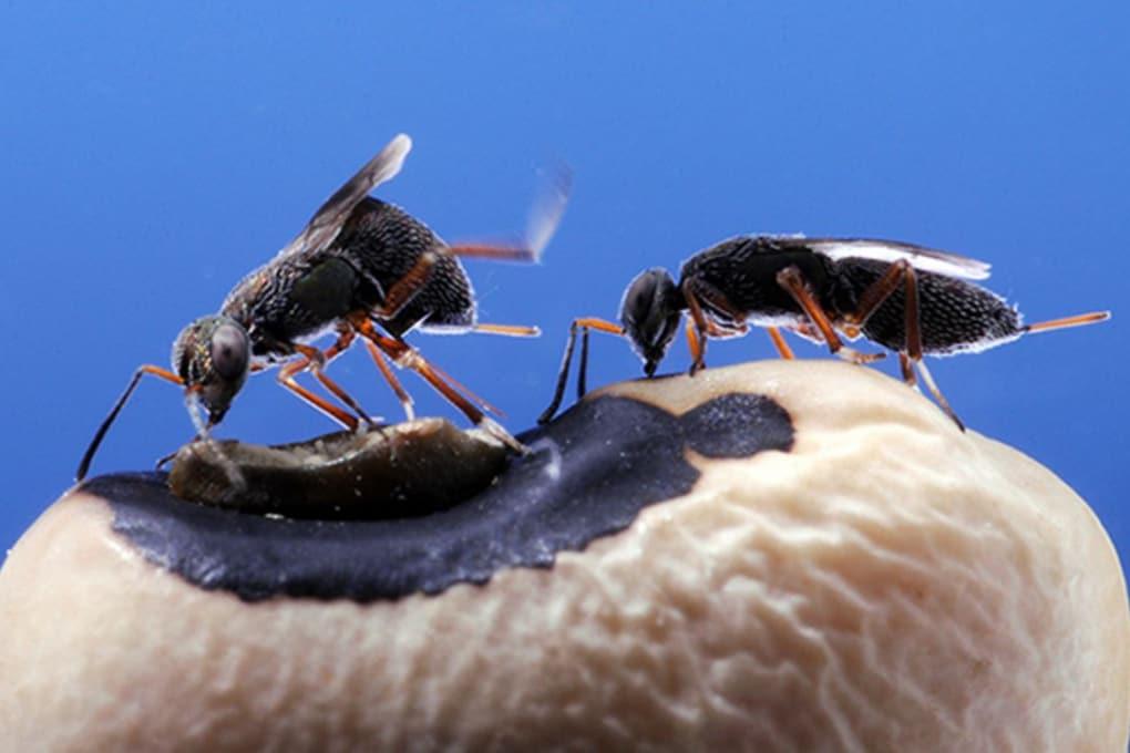 Le vespe nate nella stessa culla non si combattono