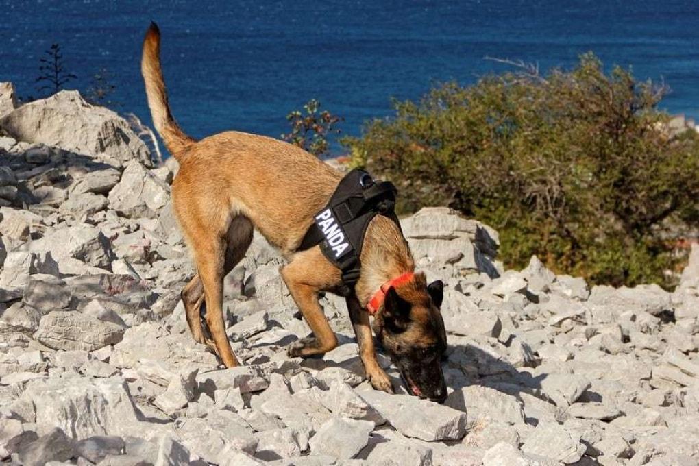 Croazia: il fiuto dei cani riporta alla luce tombe antichissime