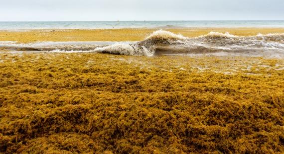 La crescita delle alghe nell'Oceano Atlantico
