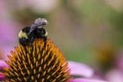 bees_sensors_web002