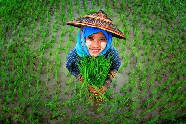 biodiversita-riso