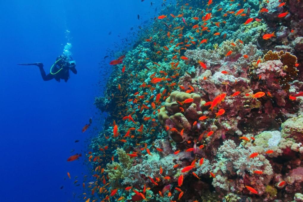 Si possono contare i pesci dell'oceano?