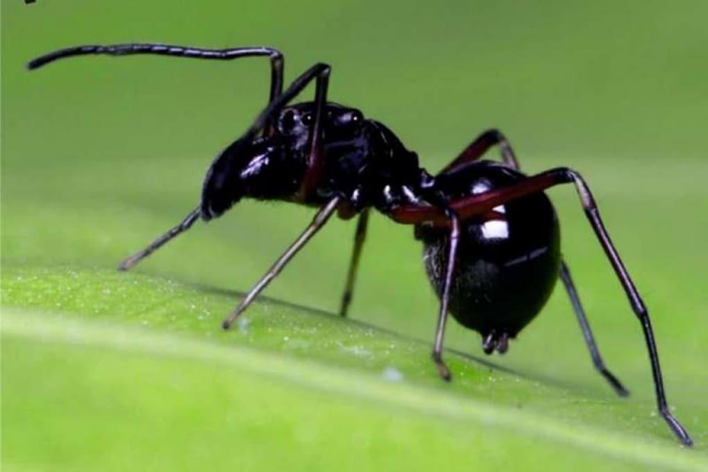 Le madri di una specie di ragno allattano e si prendono cura dei piccoli come i mammiferi