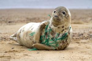 Unione Europea, plastica usa e getta, inquinamento da plastica, riciclo, riutilizzo