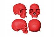 ricostruzione-cranio-sapiens