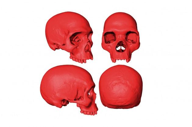 Questo cranio non esiste. Ma potrebbe somigliare a quello del primo sapiens
