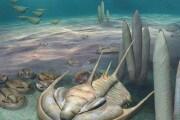 trilobite-redlichia-cambriano