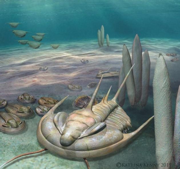 Il T. rex dei trilobiti scoperto in Australia