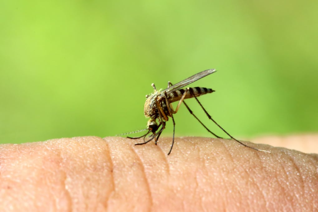 Zanzare della malaria: si discute sulla tecnica di gene-drive