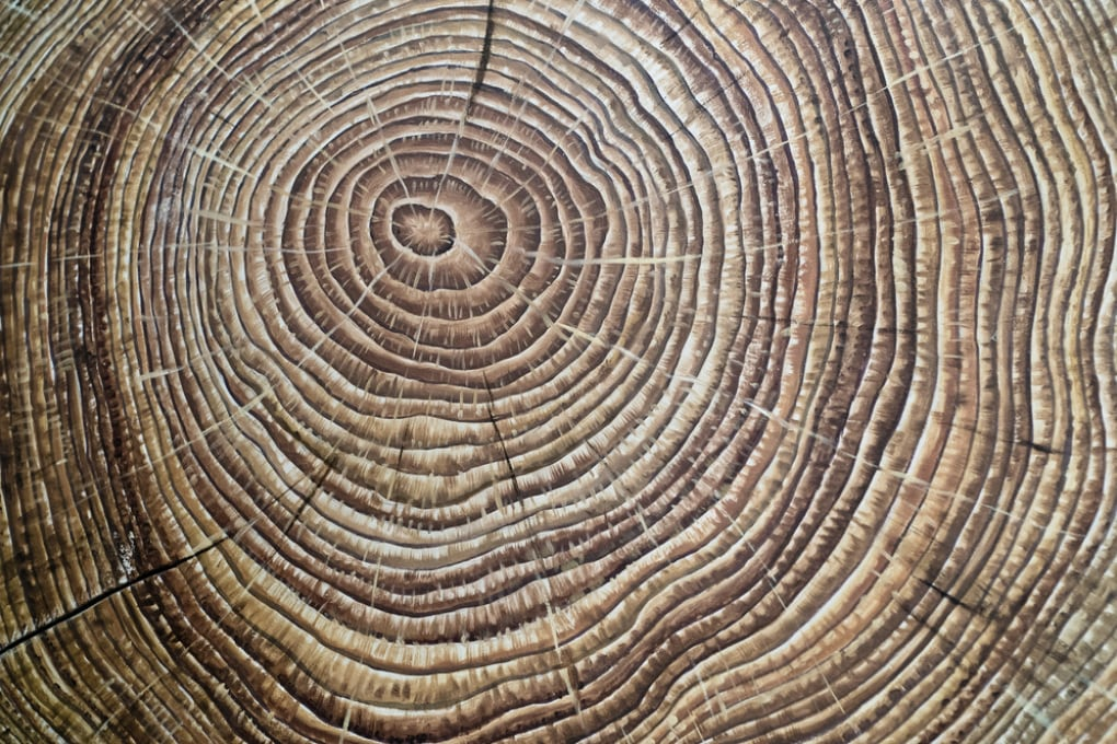 Gli anelli degli alberi svelano un mistero di 1.200 anni fa