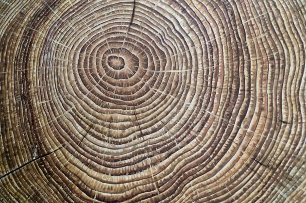 anelli-degli-alberi_shutterstock-132950336