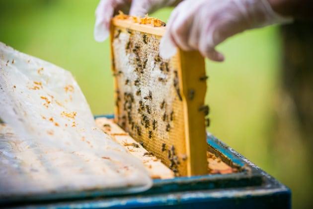 Giornata mondiale delle api amara: il maltempo azzera la raccolta di miele