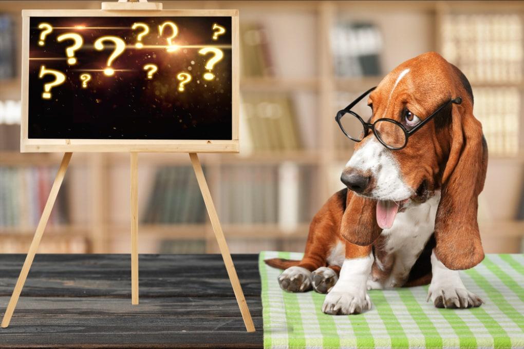 Com'è il mondo visto dai cani?