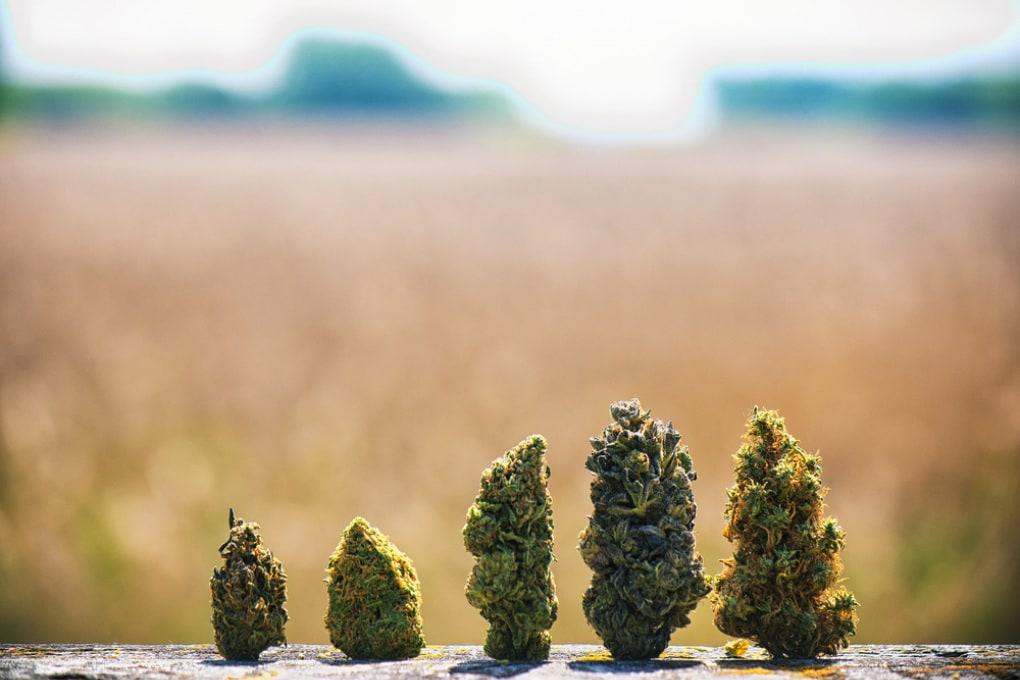 In Cina si fumava marijuana con effetti psicoattivi già 2500 anni fa