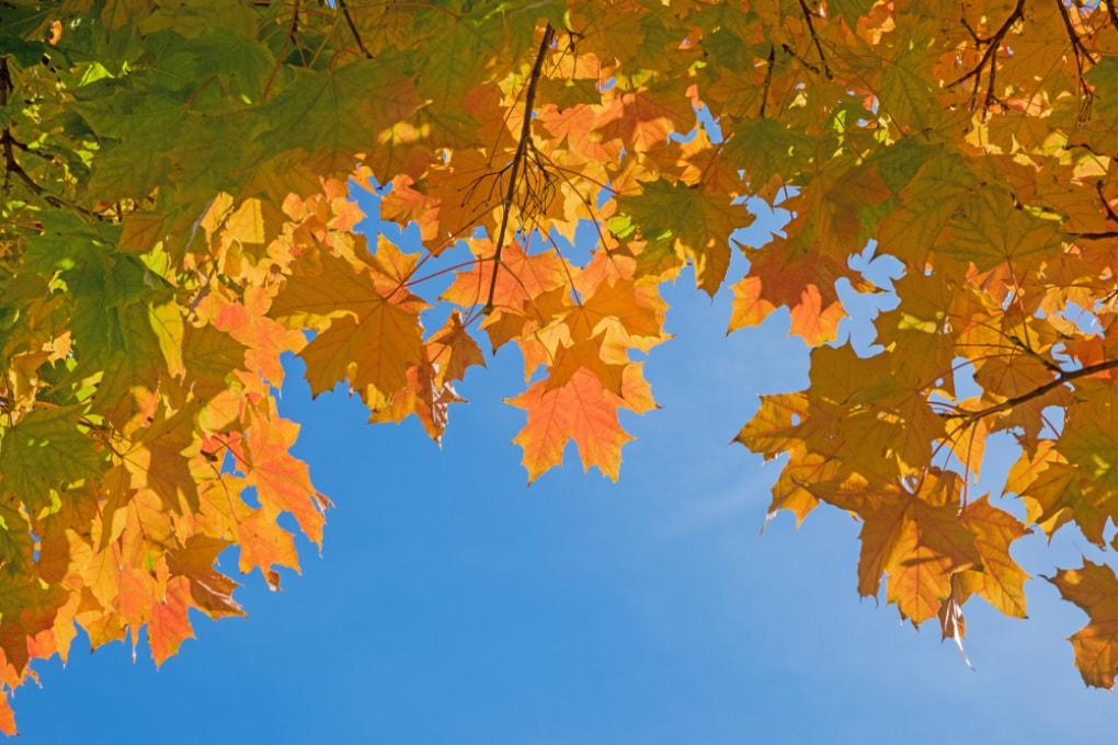 Le foglie ispessite dalla CO2 sequestrano meno carbonio atmosferico