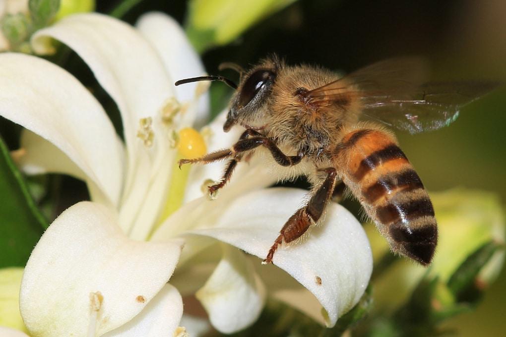 Il gene che trasforma le api operaie in cospiratrici