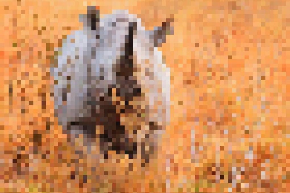 Le specie a rischio, pixel per pixel