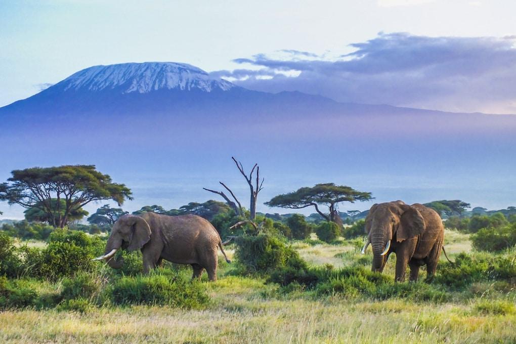 Il ruolo degli elefanti africani nel controllo del clima